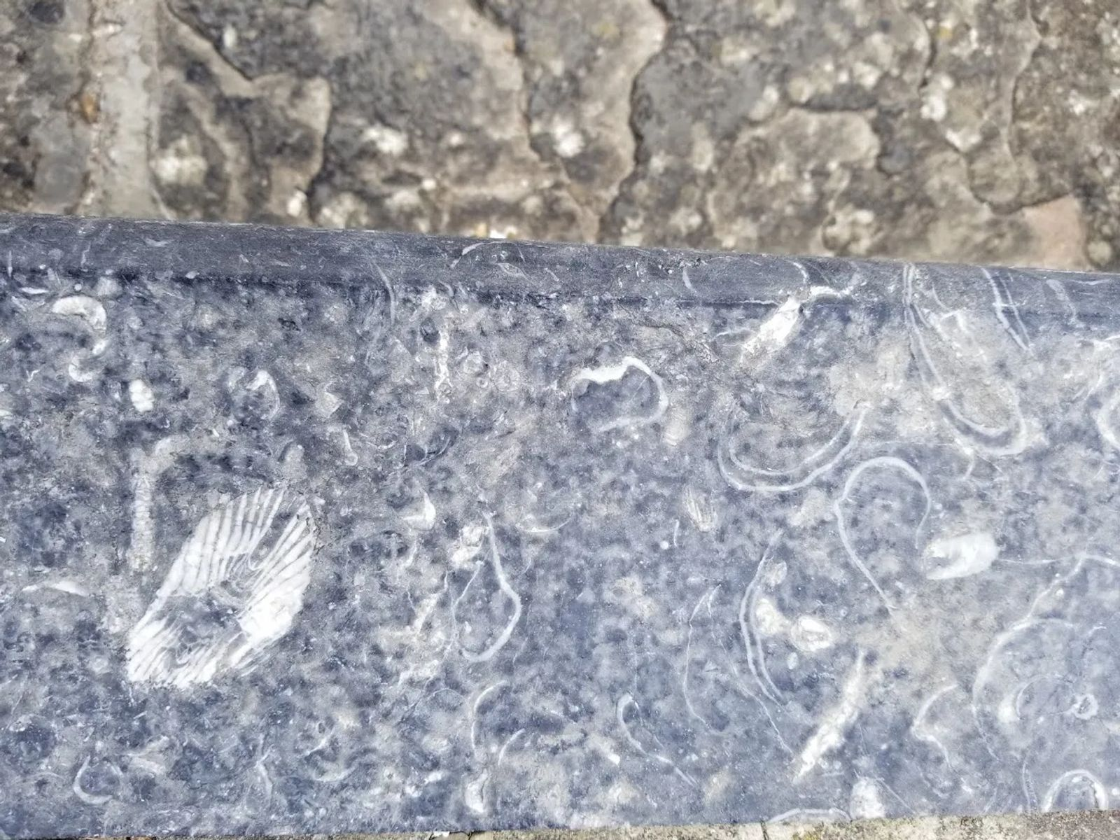 Photo of The fossils in the steps leading to the Cliffs of Moher overlook.