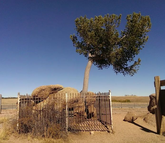 Photo of the tree growing out of a rock near Laramie, Wyoming