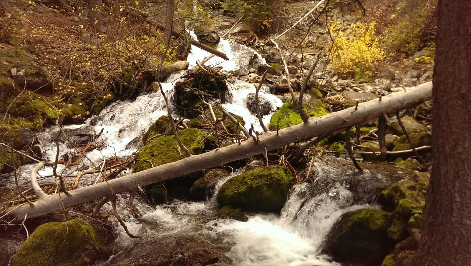 Photo of a creek in Montana